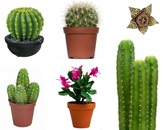 Par s muebles y decoraci n hogar y jard n for Cactus cuidados exterior
